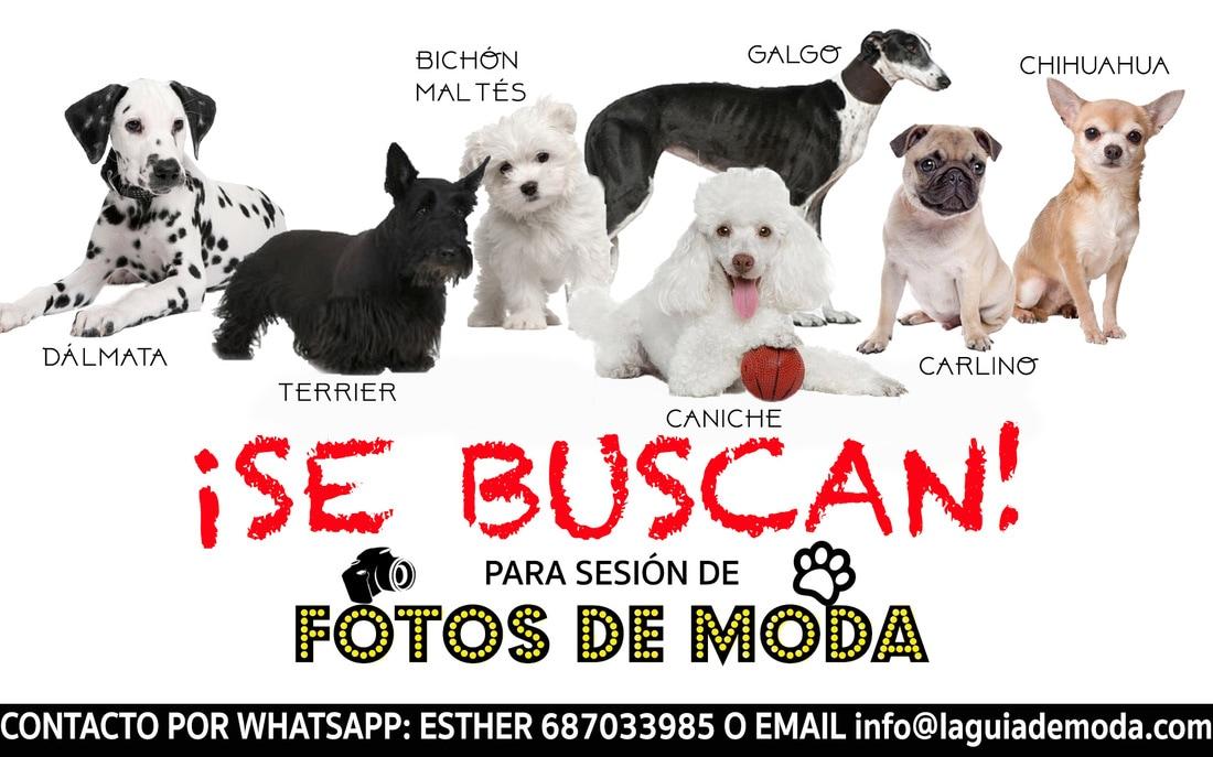 ¡SE BUSCAN! Perros de raza para sesiones de fotos
